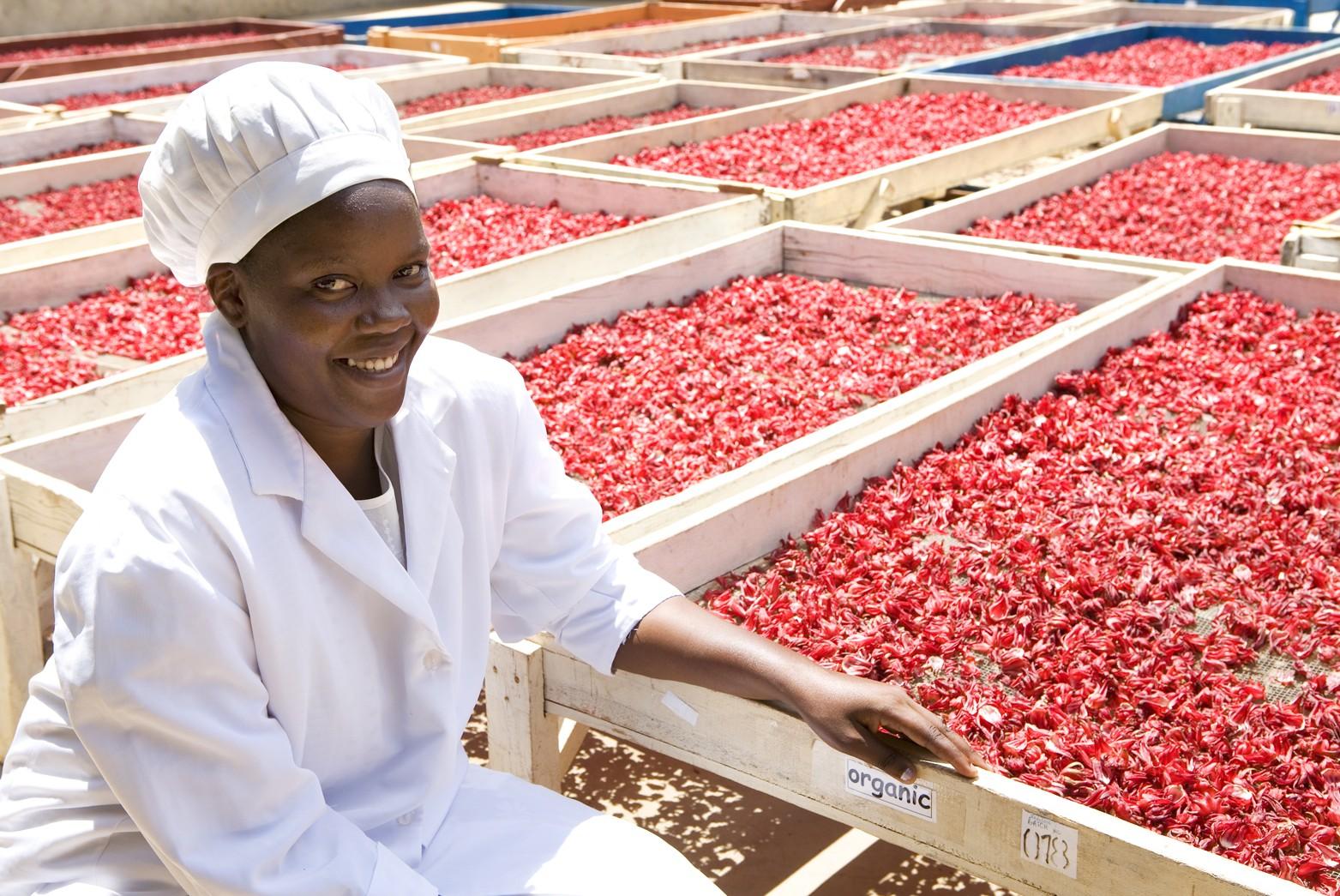 The 2015 Export Market Development Programme – Export Promotion Council